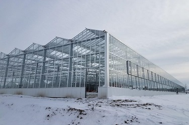 Vegetable greenhouse in Michigan